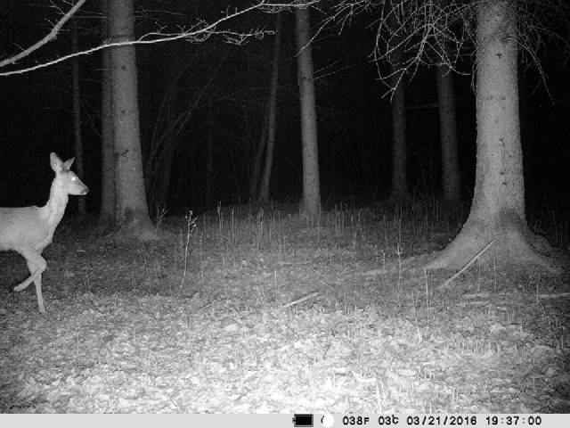 GSM-compatible Deermapper wireless trail camera: See what's going on in the groiund.